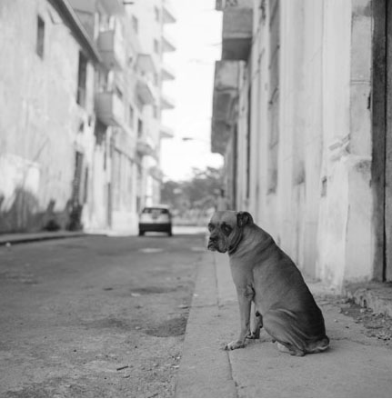 "Bryan Moore - From the ""Last Days of Castro"" Cuba 2008"