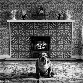 English Bulldog - Photo by Elliot Erwitt