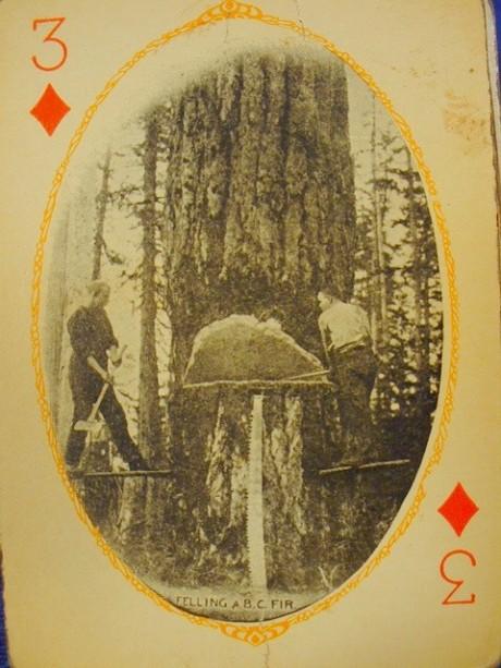cards13