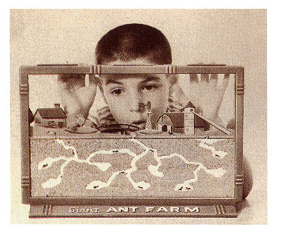 The 1950's Ant Farm | The Invisible Agent