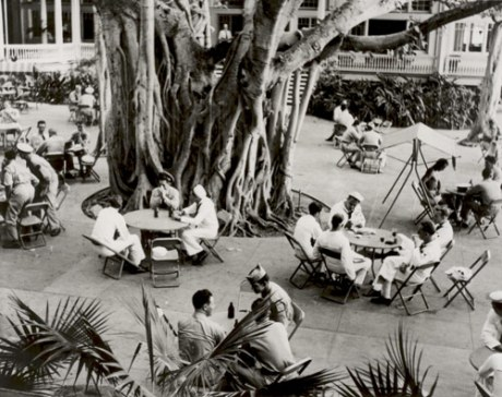 Patio Area and Banyan Tree
